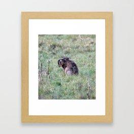 hare in the grass Framed Art Print