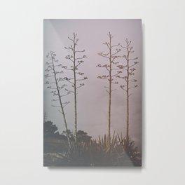 agava trees Metal Print