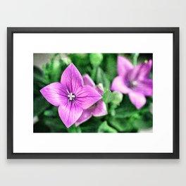 purple star Framed Art Print