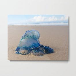 Portuguese Man O' War (1 of 2) Metal Print