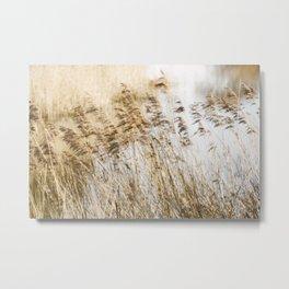 Riverside Grass Metal Print