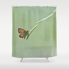 Orange & blue butterfly Shower Curtain