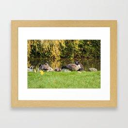 Canada Goose - Wild Life - Bird Framed Art Print