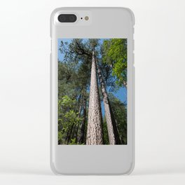 Tall Pine Trees in Mt. Lemmon Clear iPhone Case