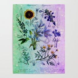 Botanical Study #2, Vintage Botanical Illustration Collage Art Poster