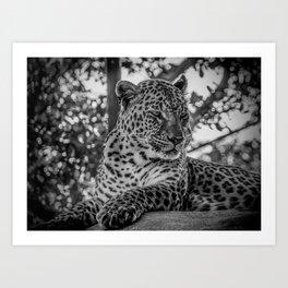 Cheetah B&W Art Print