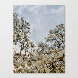 blossoms of the sun Canvas Print