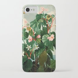 Pink Floral The Oblique-Leaved Begonias : Temple of Flora iPhone Case