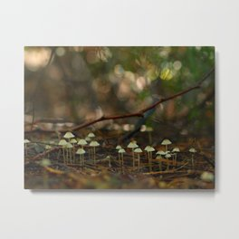 Mycena Colony In The Woods... Metal Print