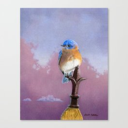 Backyard Bluebird Canvas Print
