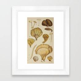 Naturalist Mushrooms Framed Art Print