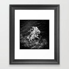 Solitary Refinement Framed Art Print