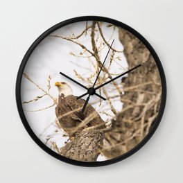 Bald Eagle Perched in Tree Wall Clock