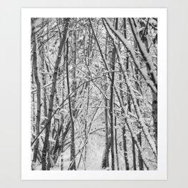 Woodland snow Art Print