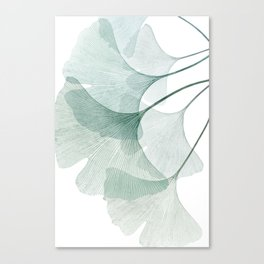 Teal Ginkgo Leaves Canvas Print
