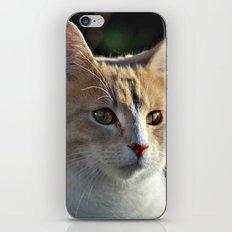 Mr Darcy iPhone & iPod Skin