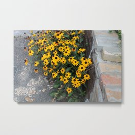 Urban Black-eyed Susans Metal Print