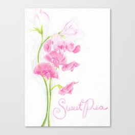 Sweet Pea Canvas Print