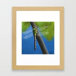 Green Darner (Anax junius) Framed Art Print