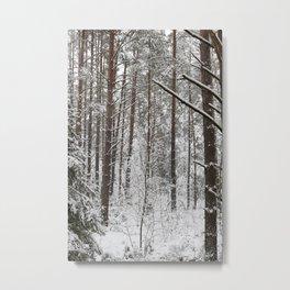 Pine trunks in winter Metal Print