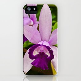 Cattleya Orchid iPhone Case