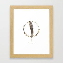 nature mandala... turkey feather, beechnuts, beechnut hulls Framed Art Print