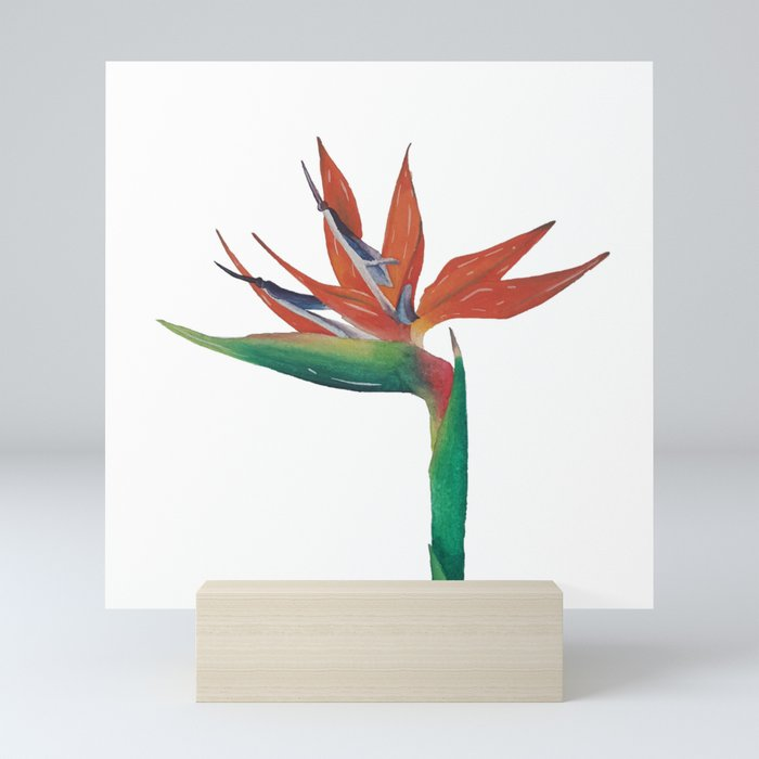 The Bird Of Paradise Mini Art Print By