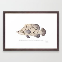 Barramundi Cod Framed Art Print
