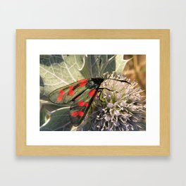 Six Spot Burnet Framed Art Print