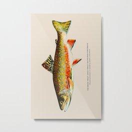 Brook Trout Metal Print