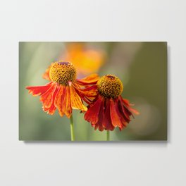 Flowers in Summer Metal Print