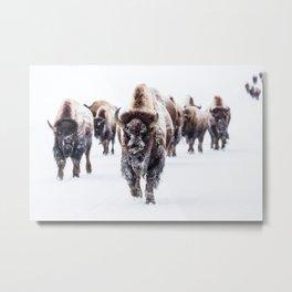 Bison Herd Through The Snow Metal Print