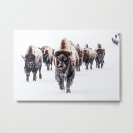 Bison Herd Through The Snow Metal Print