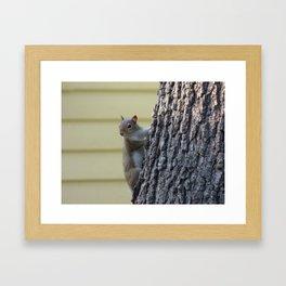 squirrel II Framed Art Print