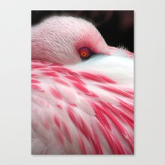 Sleeping Flamingo Canvas Print