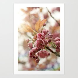little buds Art Print