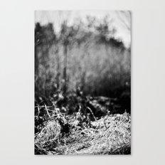 nesting grounds. Canvas Print