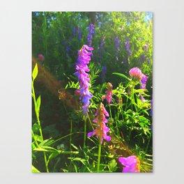 Blue Vetch  Canvas Print
