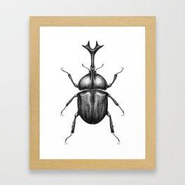 Rhino beetle Framed Art Print