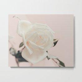White Rose on Baby Pink Metal Print