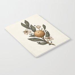 Clementine Notebook