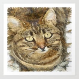 Cute Tabby Looking Up Art Print