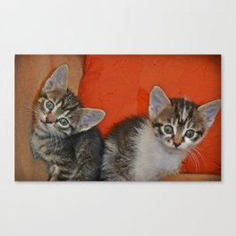 Funny kittens 2 Canvas Print