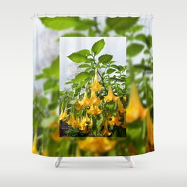 Big yellow Brugmansia called Angels Trumpets Shower Curtain