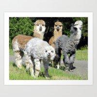 alpaca Art Prints featuring Alpaca by Gary Grady