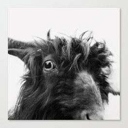 charlie the goat Canvas Print