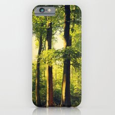German Forest in Evening Light iPhone 6s Slim Case