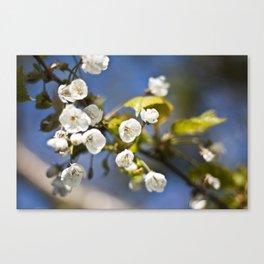 Spring is Near Canvas Print