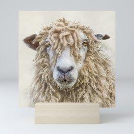 Longwool Sheep Mini Art Print