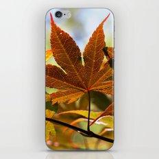 Japanese Maple Leaf iPhone & iPod Skin